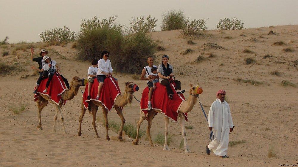 Israel Camel Riding